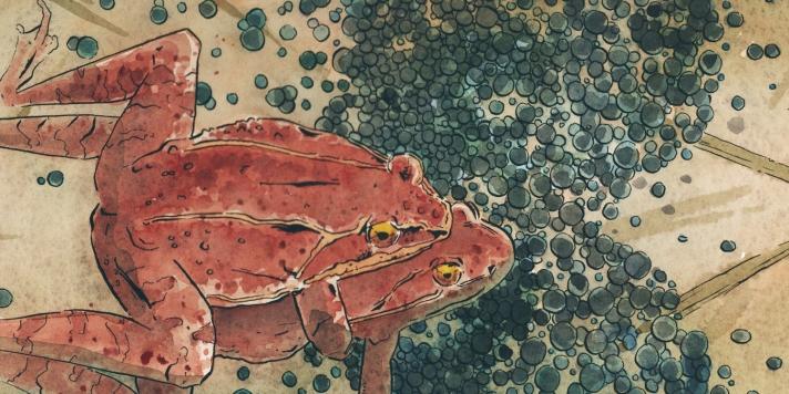 frogbang2k15